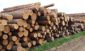 Как бесплатно получить лес от государства
