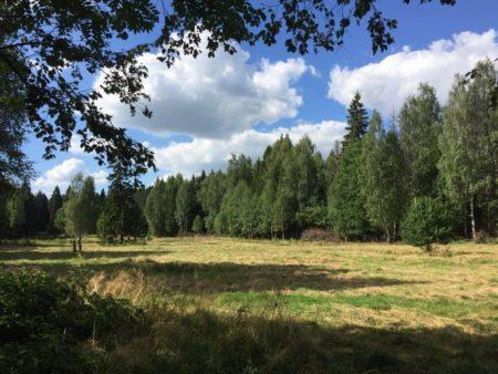 Доходы от аренды лесных участков